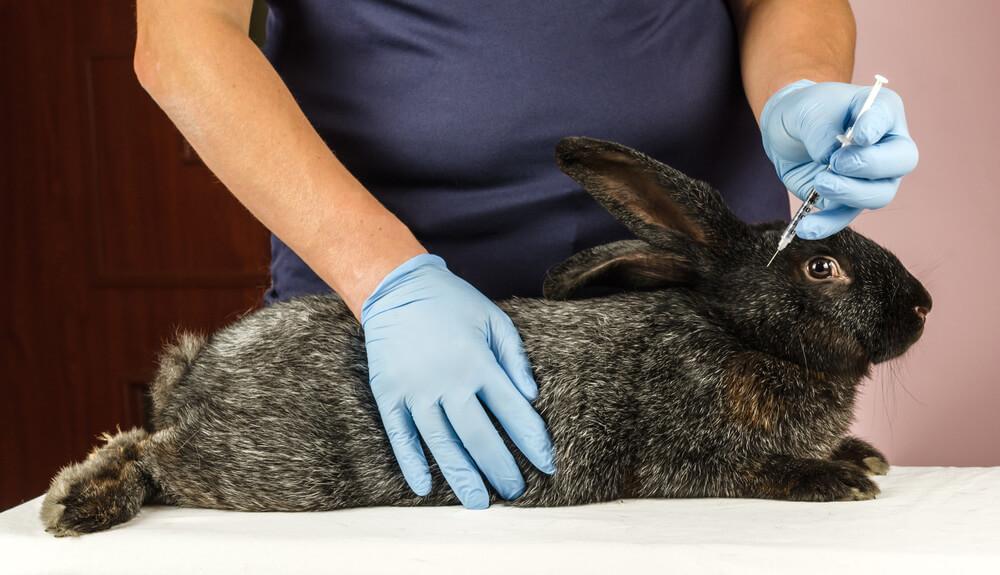 Veterinario y conejo